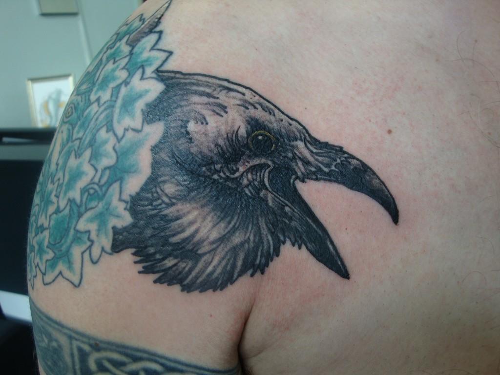 kraai schouder vogel